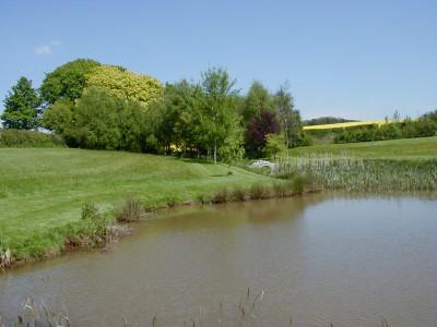 Small Carp Fishing Pond